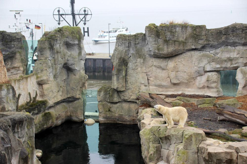 Die Eisbären-Anlage im Zoo am Meer ist großzügig gestaltet
