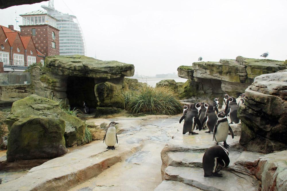 Auch Pinguine gibt es im Zoo am Meer in Bremerhaven