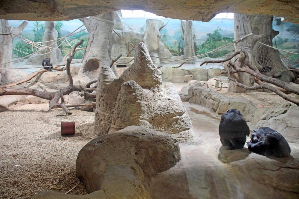 Am Eingang vom Zoo am Meer in wohnen die Schimpansen