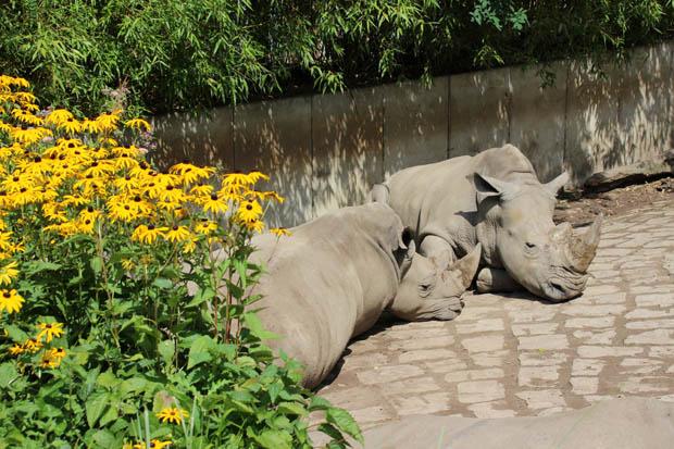 Schöne Ecken bietet der Zoo Dortmund nur wenige