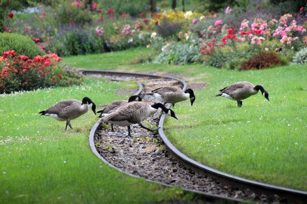 Der Westfalenpark bietet zahlreiche Gartenformen und immer wieder neue Asichten