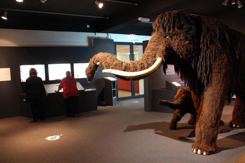 Ein Mammut ist der absolute Blickfang in der Ausstellung