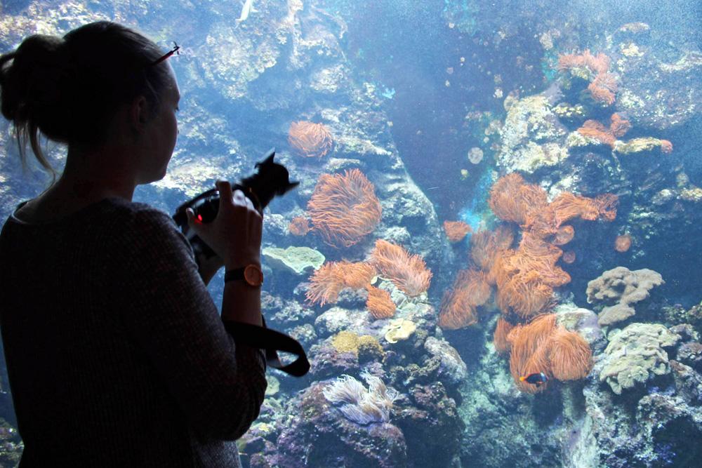 Fische und Aquarien im Klimahaus Bremerhaven