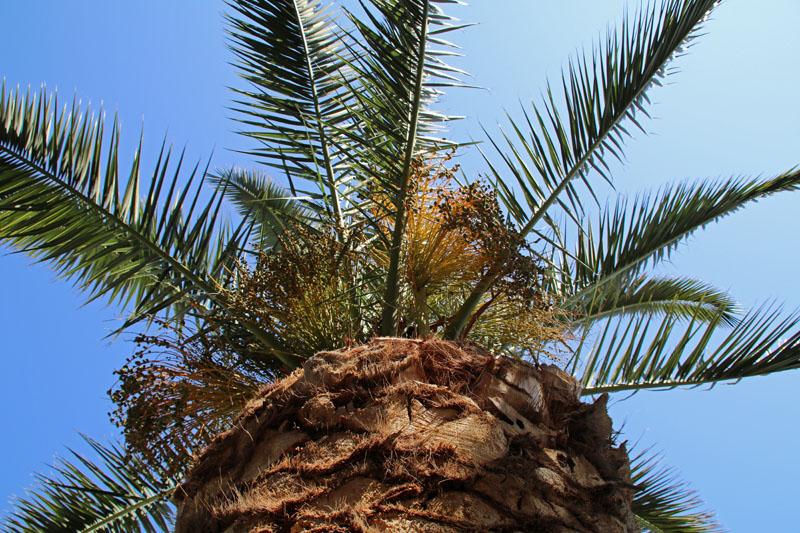 Unter Palmen kann man sich nur wohlfühlen