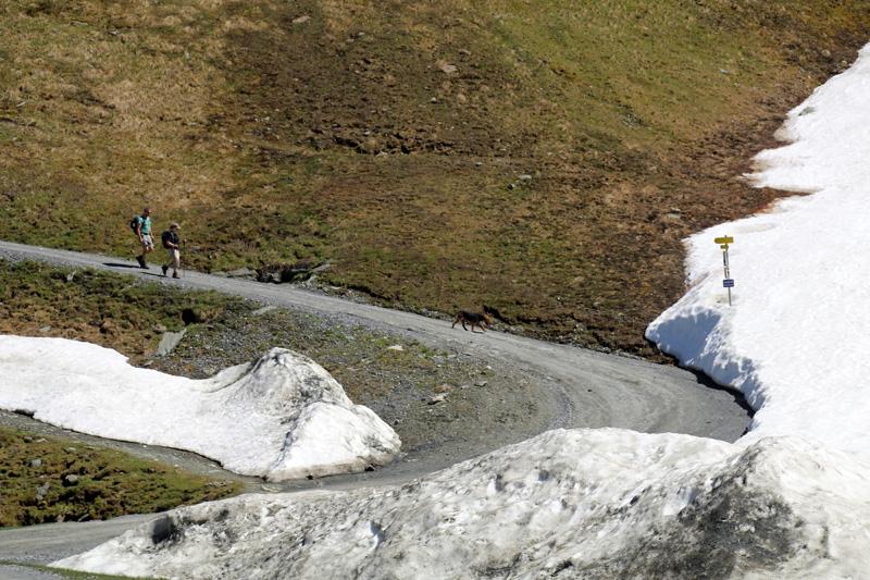 Die Besucher verteilen sich sehr gut. Zahlreiche Wanderwege zweigen am Kitsteinhorn ab