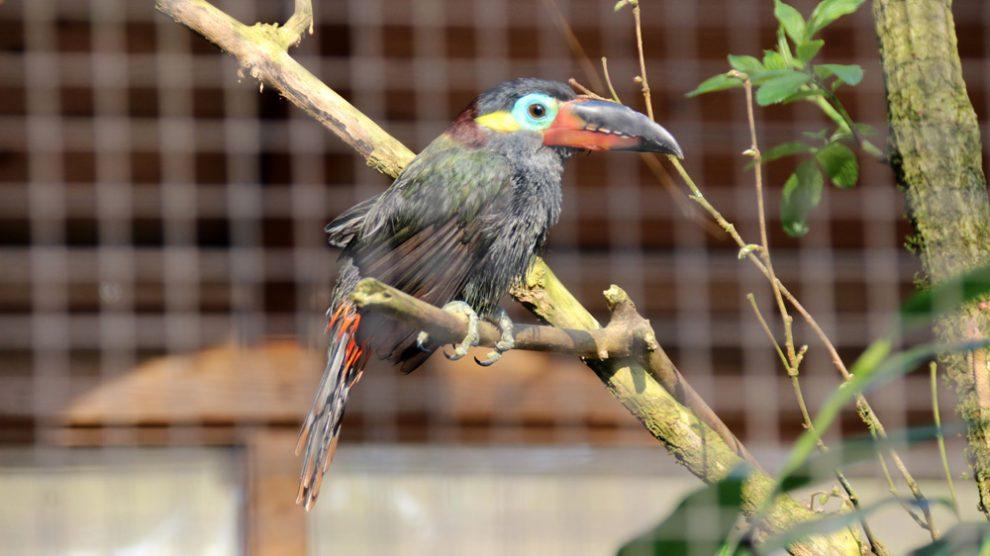 Ein exotischer Vogel im Vogelpark Heiligenkirchen