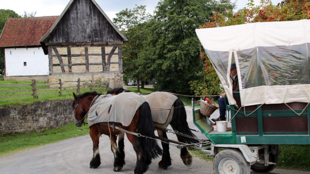 Wer will kann auch mit einer Kutsche durchs Freilichtmuseum Detmold fahren
