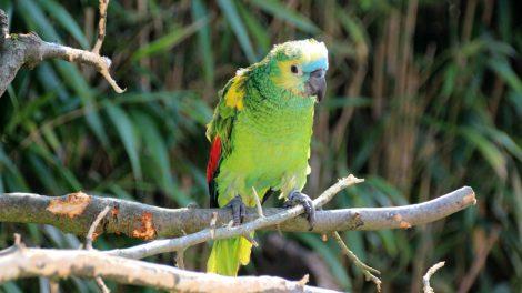 Bunte Papageien sind im Vogelpark zu sehen