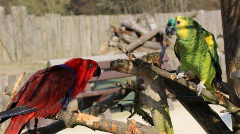 Die Farbenpracht der Vögel ist ideal für schöne Fotos