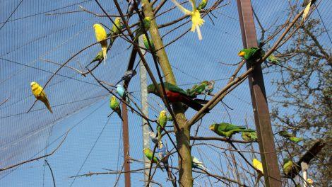 Diese begehbare Anlage im Vogelpark Heiligenkirchen hat mir besonders gut gefallen