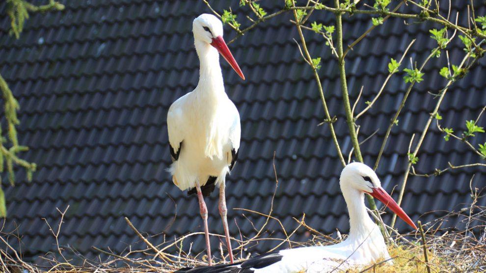 Wellensittiche leben im Vogelpark Heiligenkirchen in einer begehbaren Voliere