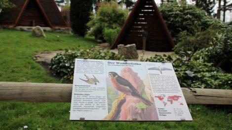 Infotafeln verraten viel Wissenswertes über die Adler