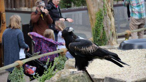 Aus allen Perspektiven kann man die Adler ablichten