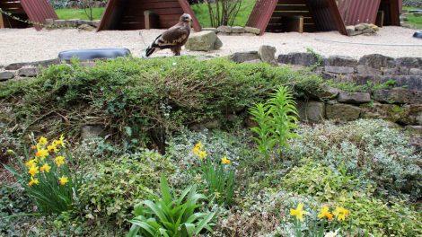 Die Adlerwarte ist wunderschön angelegt