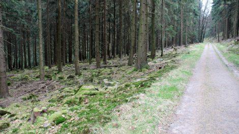 Sowohl Laub- als auch Nadelwälder können hier durchwandert werden