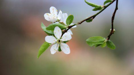 Die Kulturlandschaft zeigt sich im Frühjahr besonders blütenreich