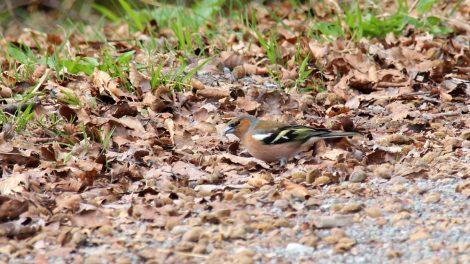 Vor allem auf viele Vögel trifft man im Teutoburger Wald