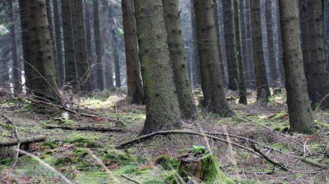 Solche Ansichten in dunkle Wälder hinein, faszinieren mich immer wieder.