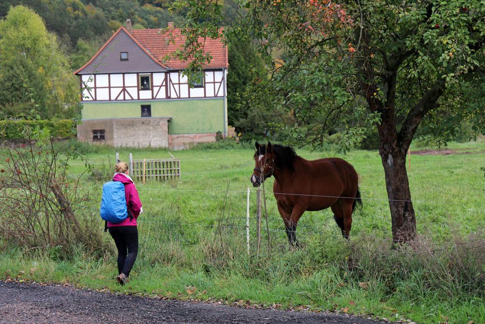 Beim Lutherweg wandern sieht man viele Tiere