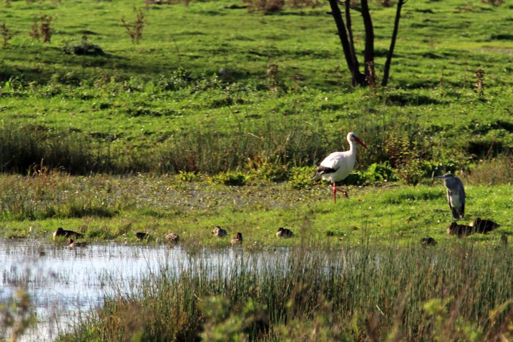 In den Auen der Werra lassen sich viele Vögel beobachten