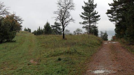 Nach Creuzburg steigt der Lutherweg auf eine Hochebene an