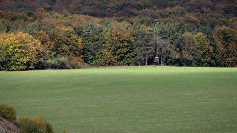 Der Thüringer Wald in Herbst-Färbung
