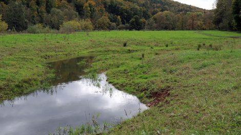 Viele der Flussauen an der Werra wurden renaturiert