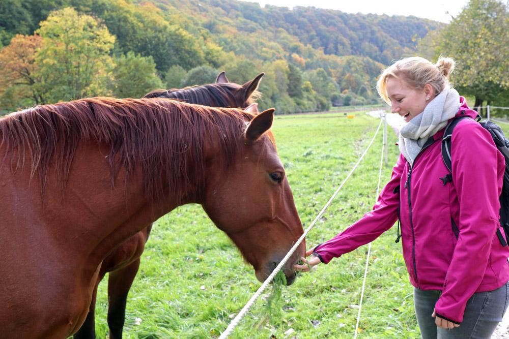 Auf Pferde trifft man beim Lutherweg wandern immer wieder