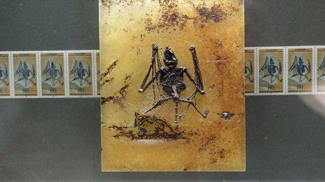 Fledermaus im All im Senckenberg Museum Frankfurt