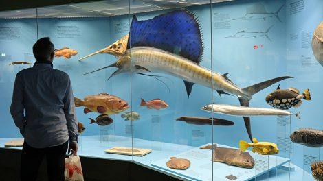 Fische im Senckenberg Museum Frankfurt