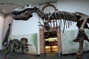 Dinosaurier Museum: Senckenberg Museum Frankfurt