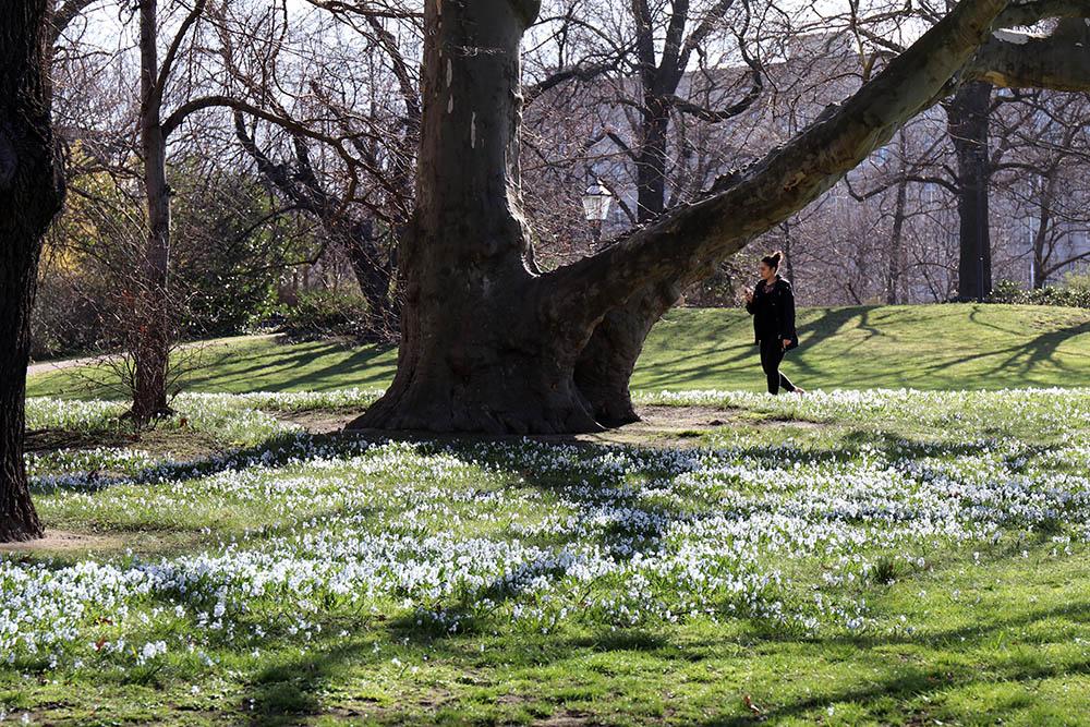 Ein Park in Leipzig im Frühling