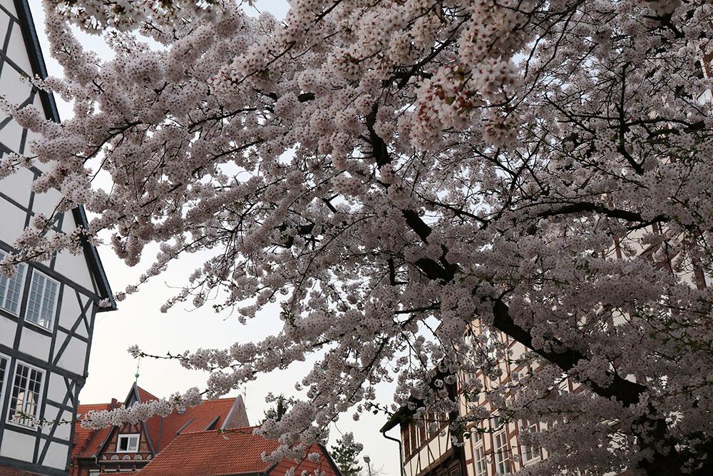 Im Frühling ist Wolfenbüttel besonders schön