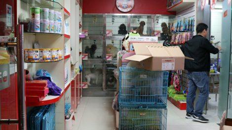 Zoohandlung Hunde Katzen in china