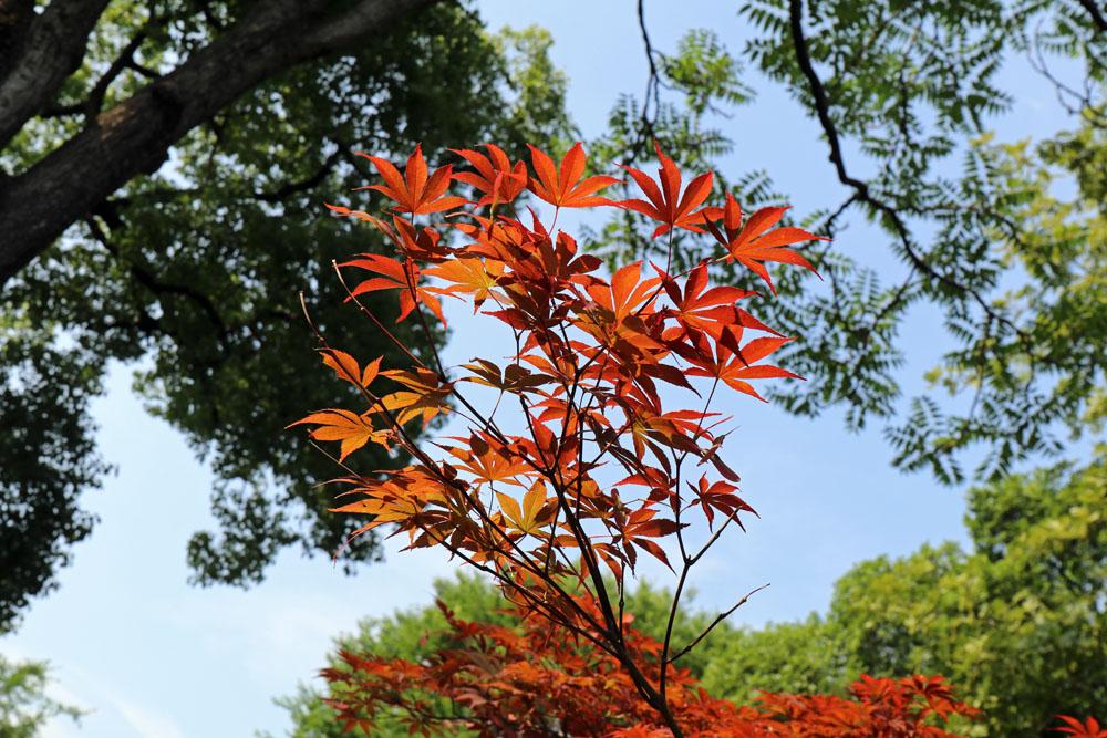 Je nach Jahreszeit finden sich unterschiedliche Farbtupfer im Garten des bescheidenen Beamtens in Suzhou in China