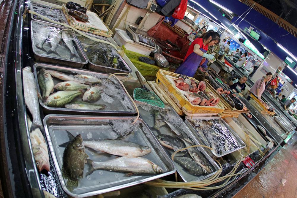 Viele der Fische in der Markthalle auf dem Markt in Suzhou China sind leider noch lebendig