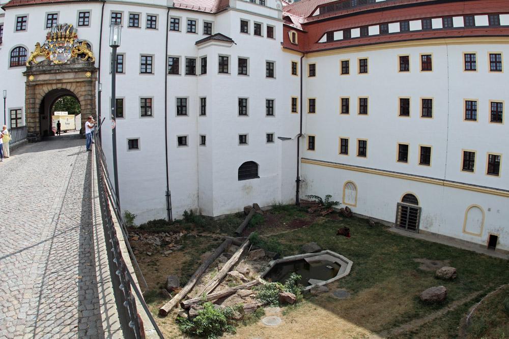 Im Burggraben von Schloss Hartenfels in Torgau leben Bären