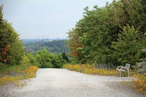 Die Natur hat die Schurenbachhalde in Essen im Ruhrgebiet erobert