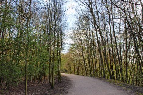 Durch einen kleinen Wald führt der Weg auf die Tetraeder Halde Beckstraße in Bottrop im Ruhrgebiet