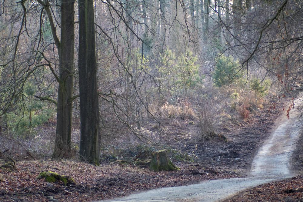 Weg im Wildschweinpark Melle
