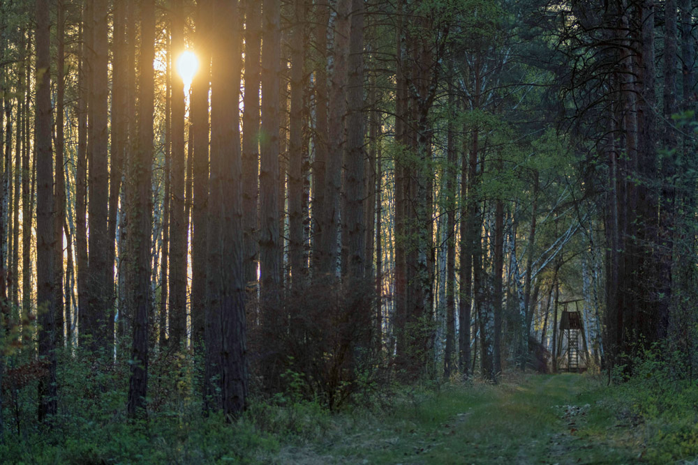 Sonnenaufgang im Wald im Naturschutzgebiet Loben in Brandenburg