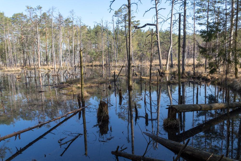See mit Moor im Wald im Naturschutzgebiet Der Loben in Brandenburg