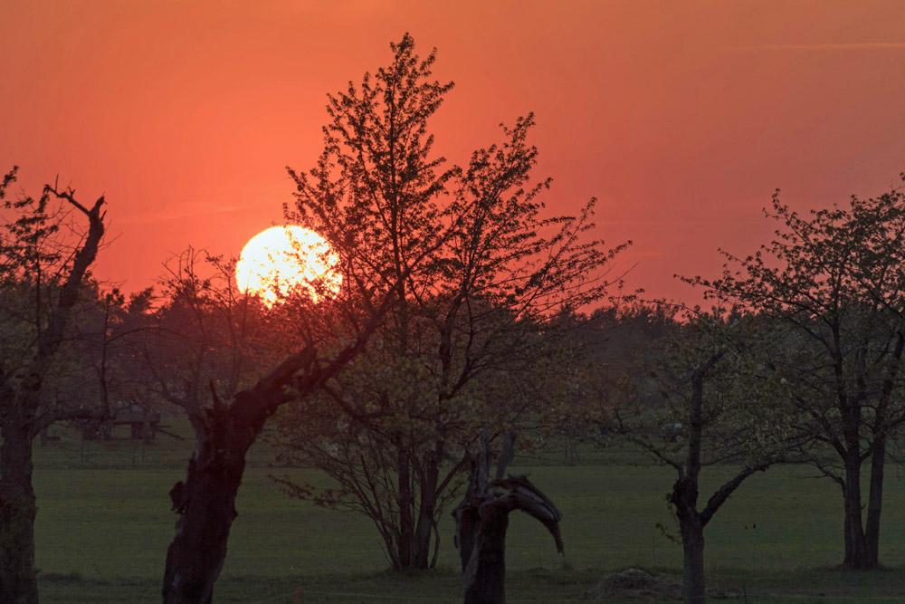 Sonnenuntergang auf einer Streuobst-Wiese in Hohenleipisch in Brandenburg