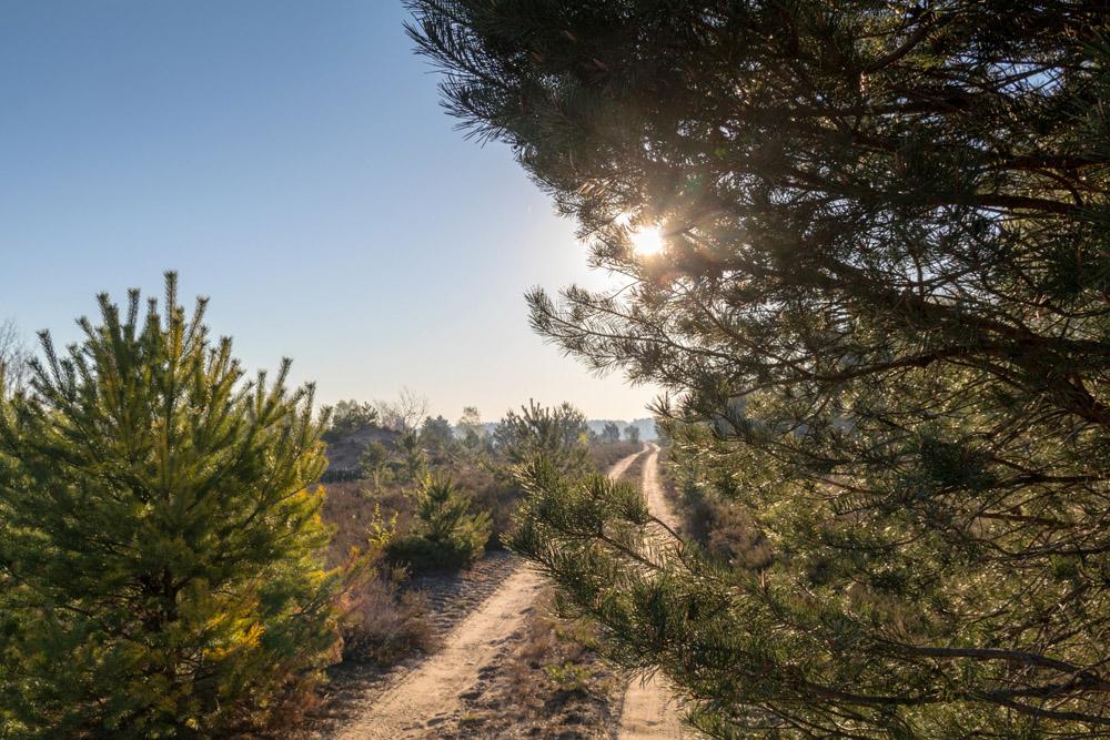 Naturpark Niederlausitzer Heidelandschaft in Brandenburg zum Sonnenaufgang