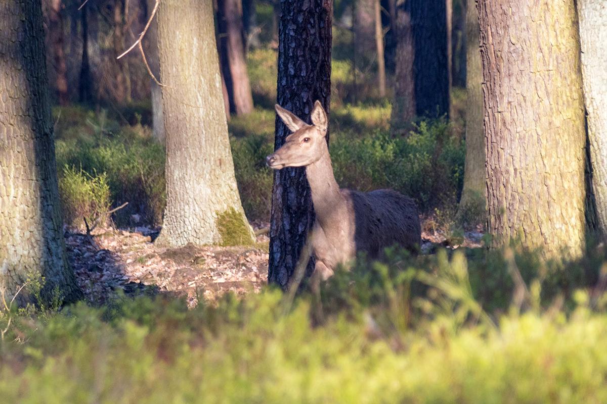Auf Fotosafari in Brandenburgs Wäldern und Mooren