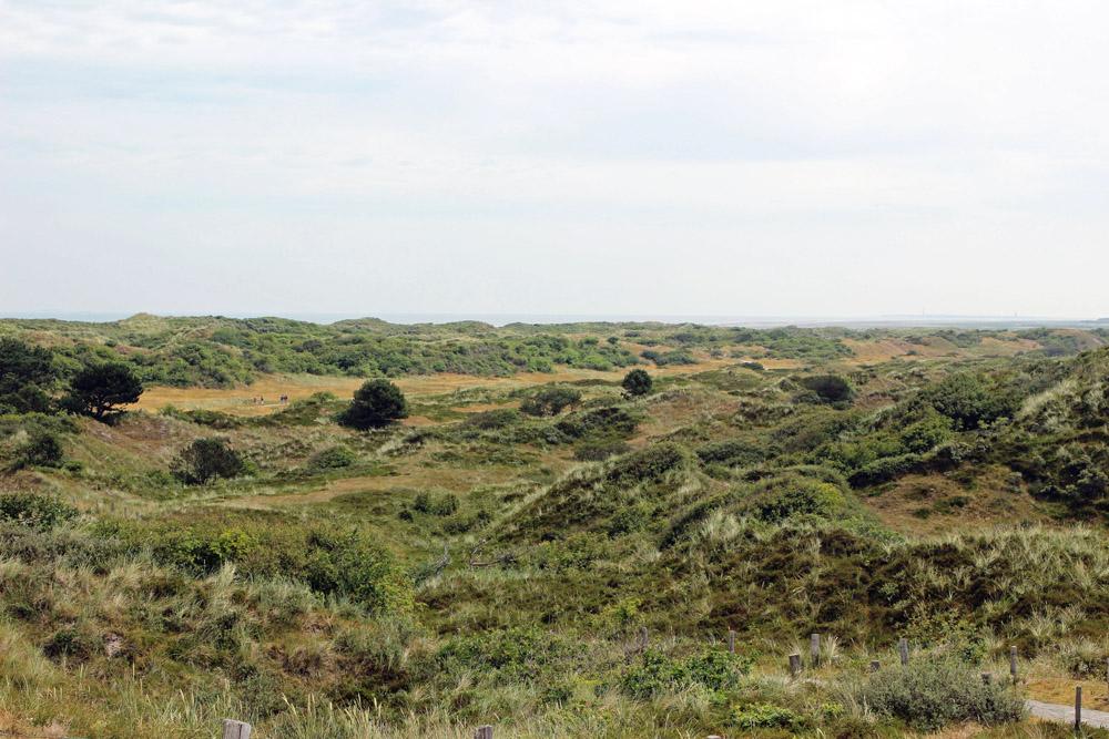 Dünen auf der Nordseeinsel Spiekeroog im Wattenmeer