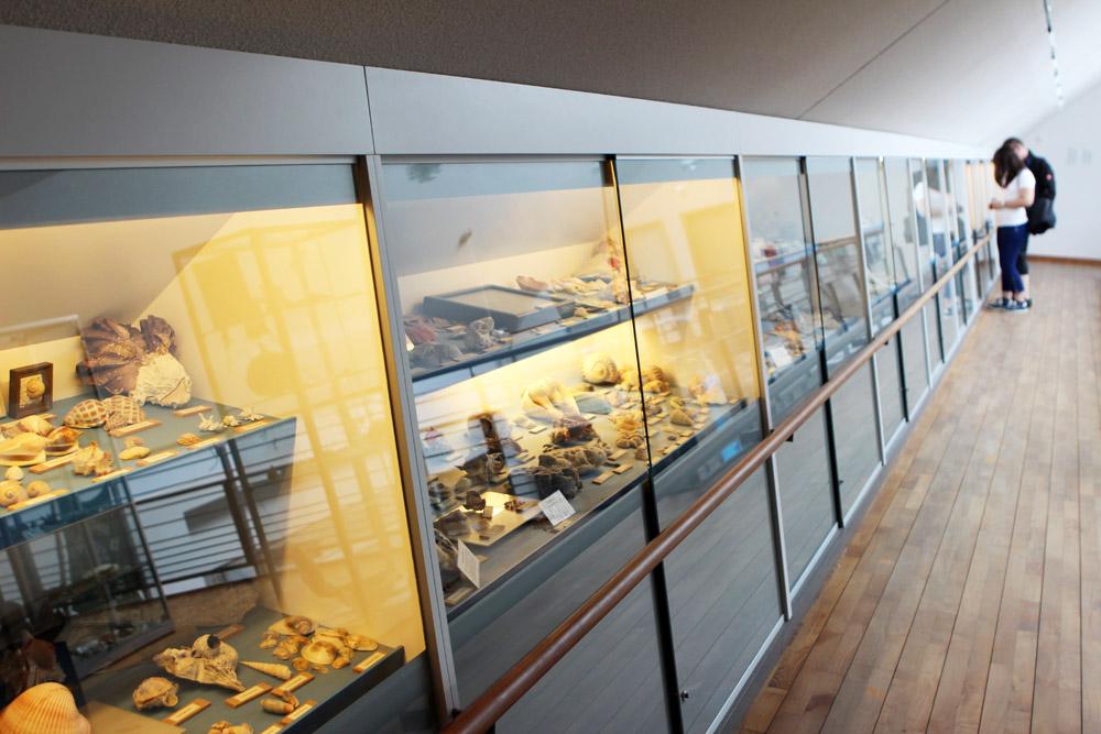 Muschelmuseum auf Spiekeroog