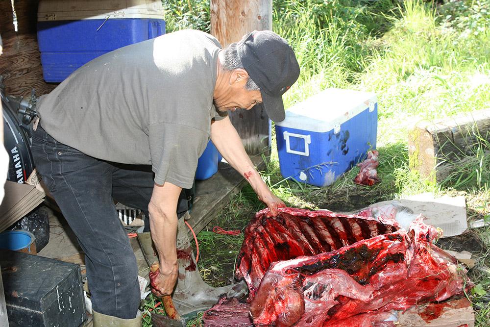 Ein Indianer schlachtet nach der Jagd ein Karibu in Kanada