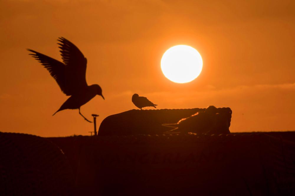 Camping an der Nordsee zum Sonnenuntergang mit Möwe