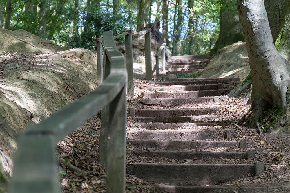 Wandern auf dem Hexenpfad in Tecklenburg